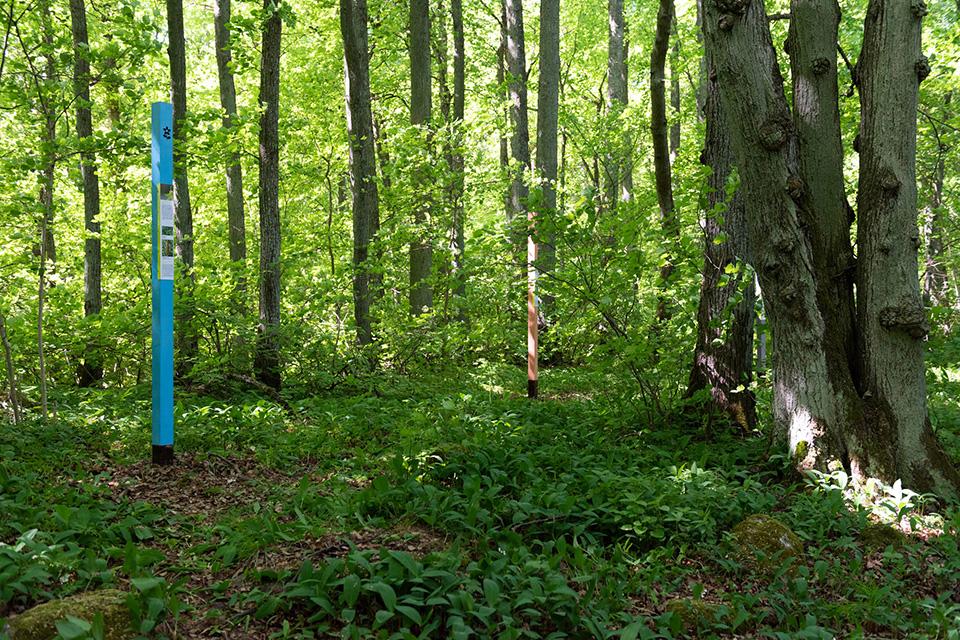 Veskimetsa rada. Tallinna Loomaaed