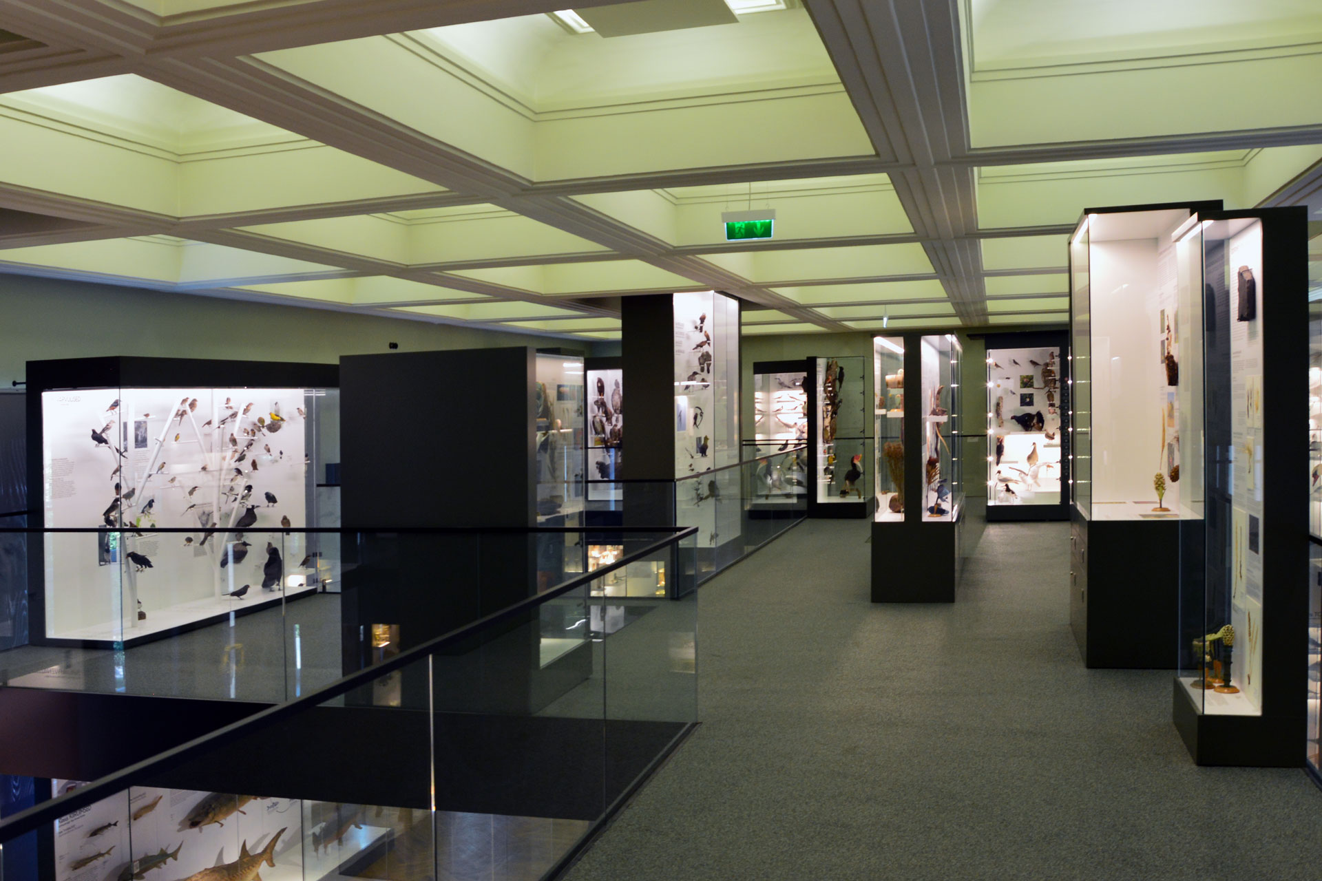 University_of_Tartu_Natural_History_Museum